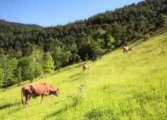 turismo rural em Portugal
